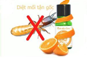 chống mối mọt cho đồ gỗ bằng tinh dầu cam