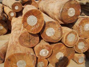 gỗ nào tốt nhất