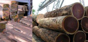 Phân loại gỗ lim